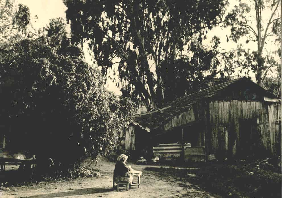 זכריה שדה, טודי - zeharia-142
