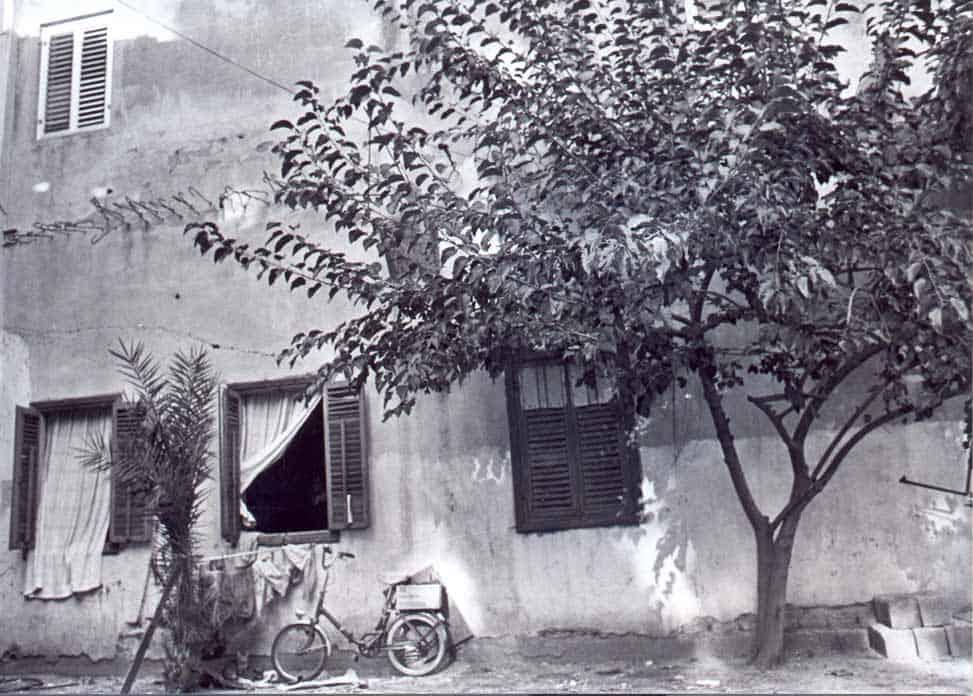 זכריה שדה, טודי - zeharia-36